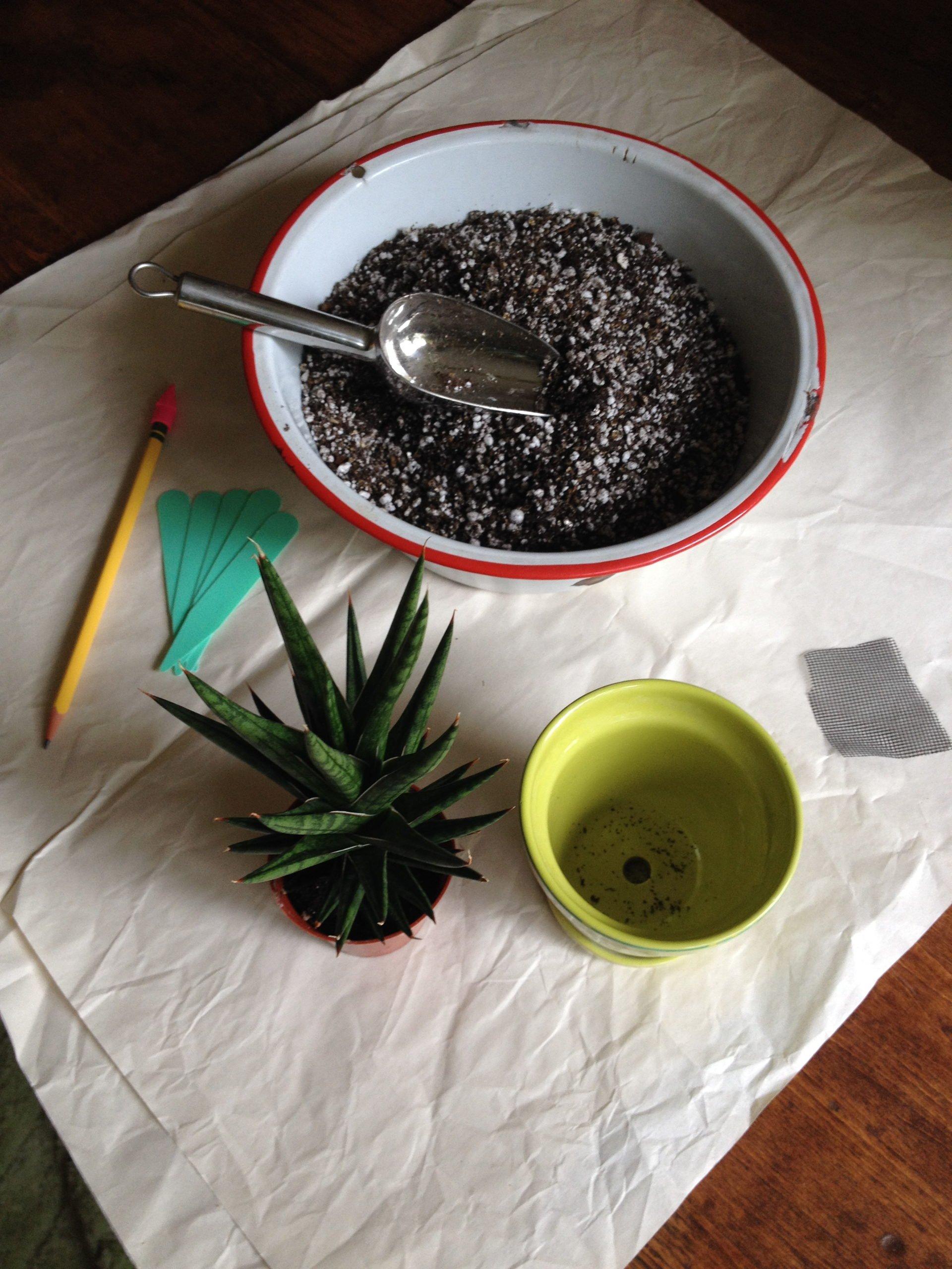 Repotting supplies