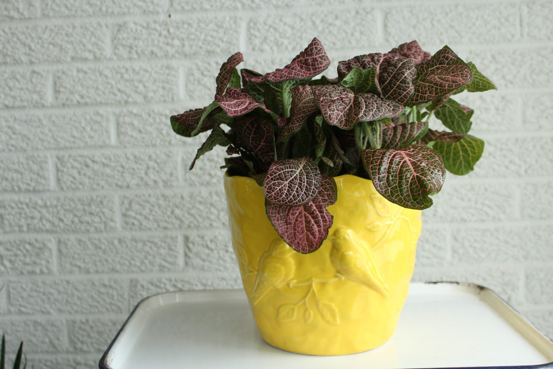 Love it in the yellow pot