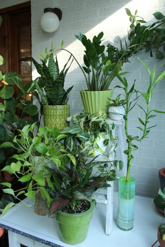 Six easy dorm room plants