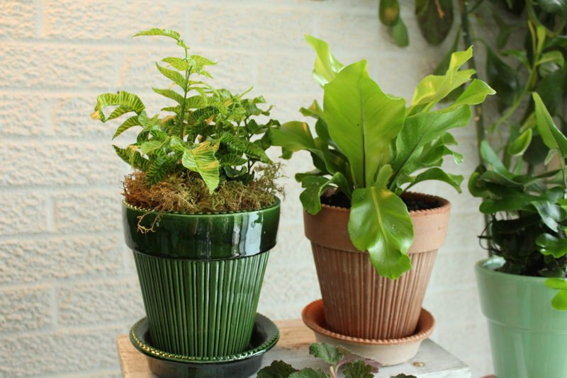Bergs pots with new plants