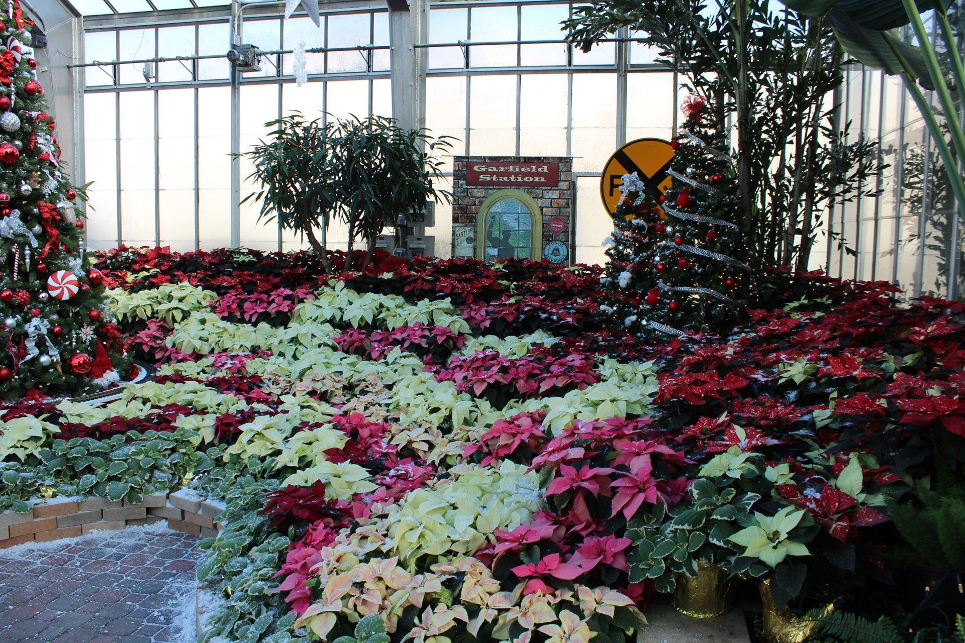 Garfield Conservatory holiday display