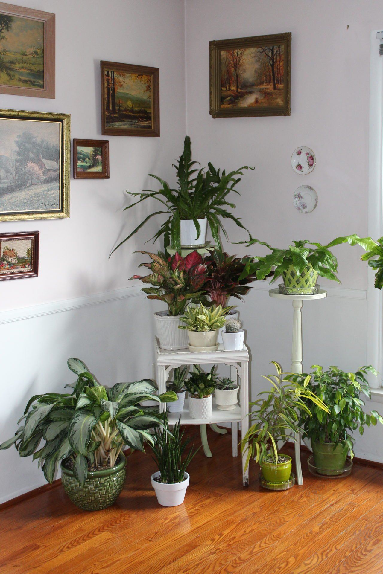 Staged houseplants