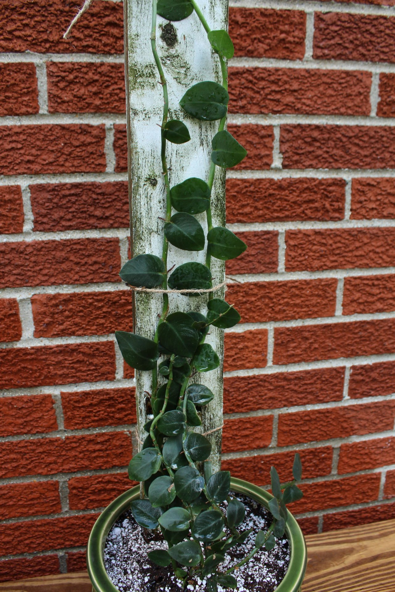 shingle plant on a picket fence post