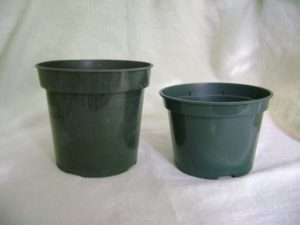 standard and azalea pot