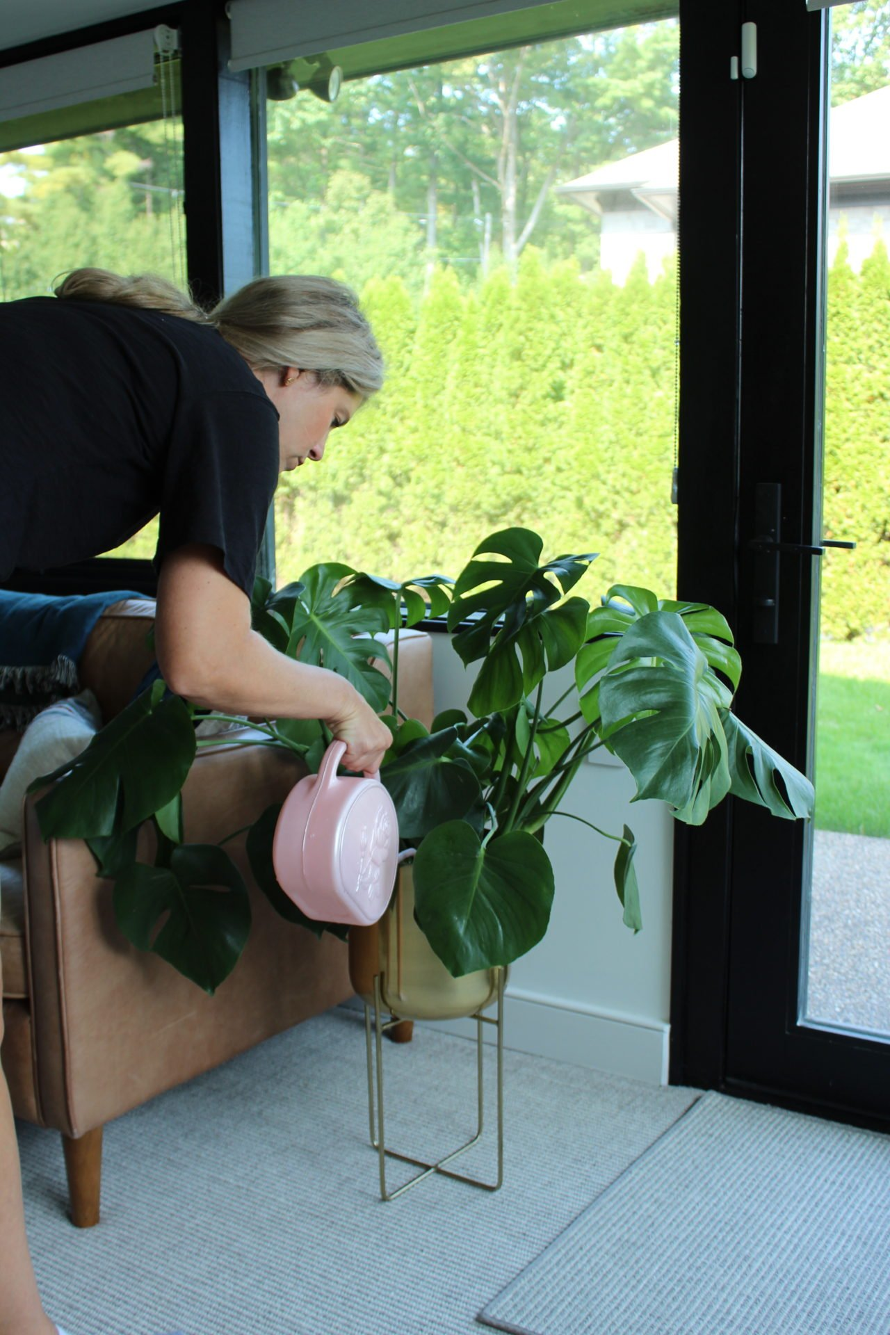 top watering a plant
