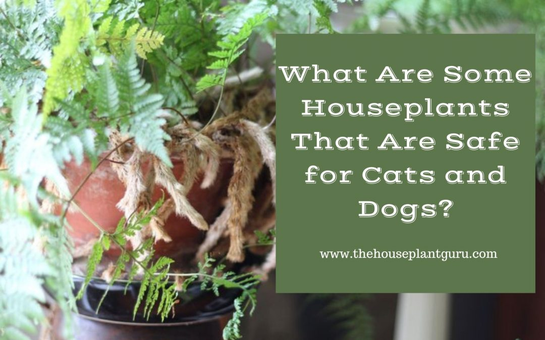 What Are Some Houseplants That Are Safe for Cats and Dogs?