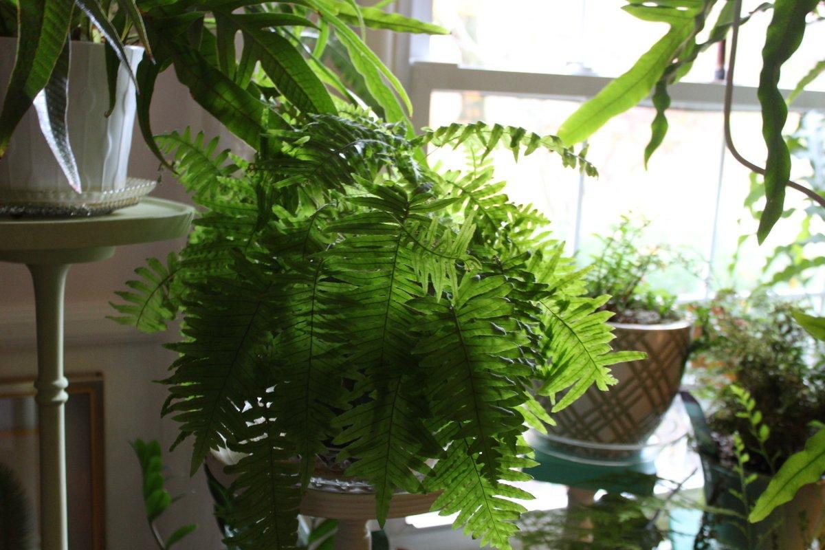 green worm fern