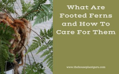 What Are Footed Ferns and How To Care For Them