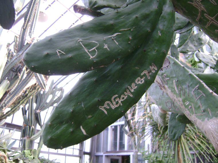 Graffiti on plants