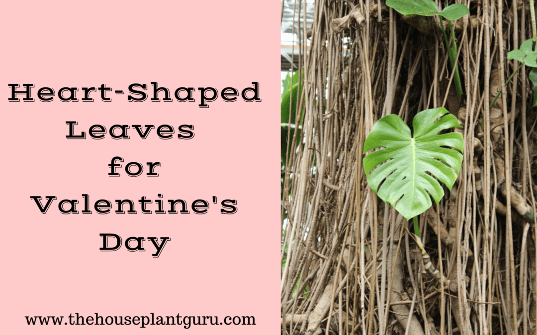 Heart-Shaped Leaves for Valentine's Day