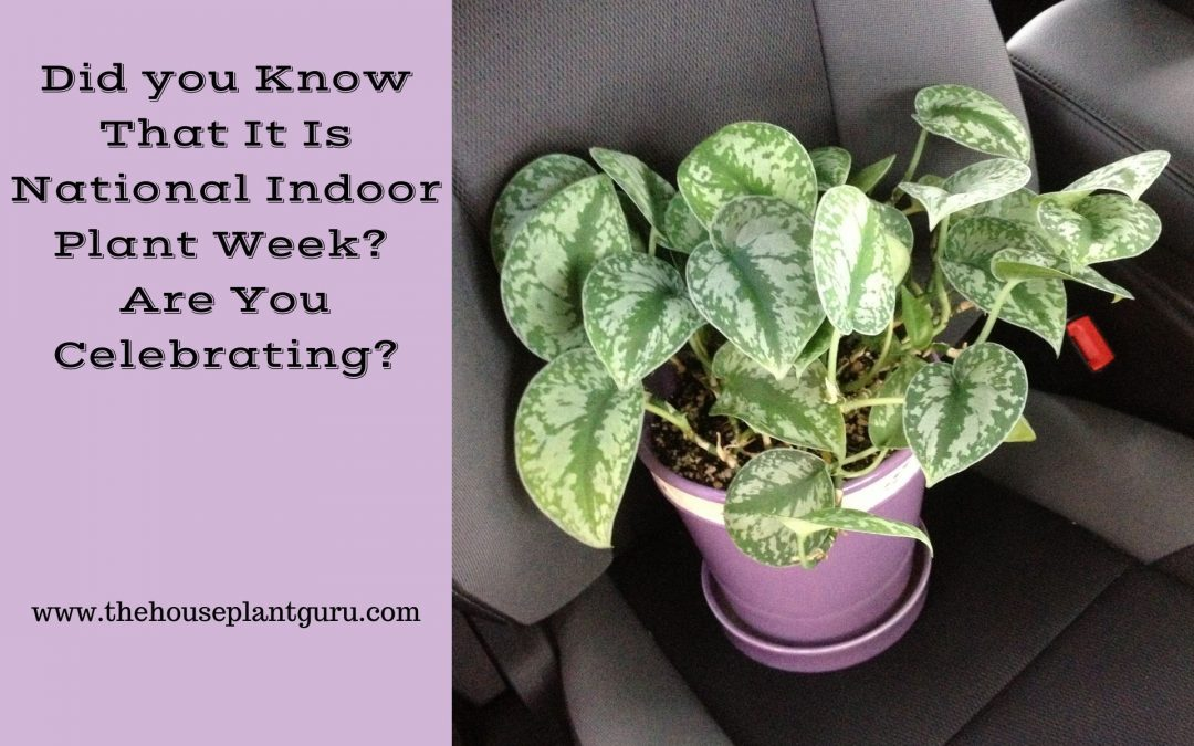 Did you Know That It Is National Indoor Plant Week? Are You Celebrating?
