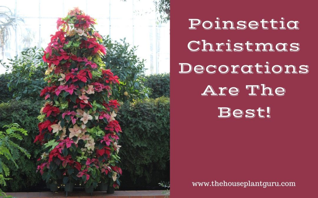 Poinsettia Christmas Decorations Are The Best!