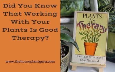 Did You Know That Working With Your Plants Is Good Therapy?