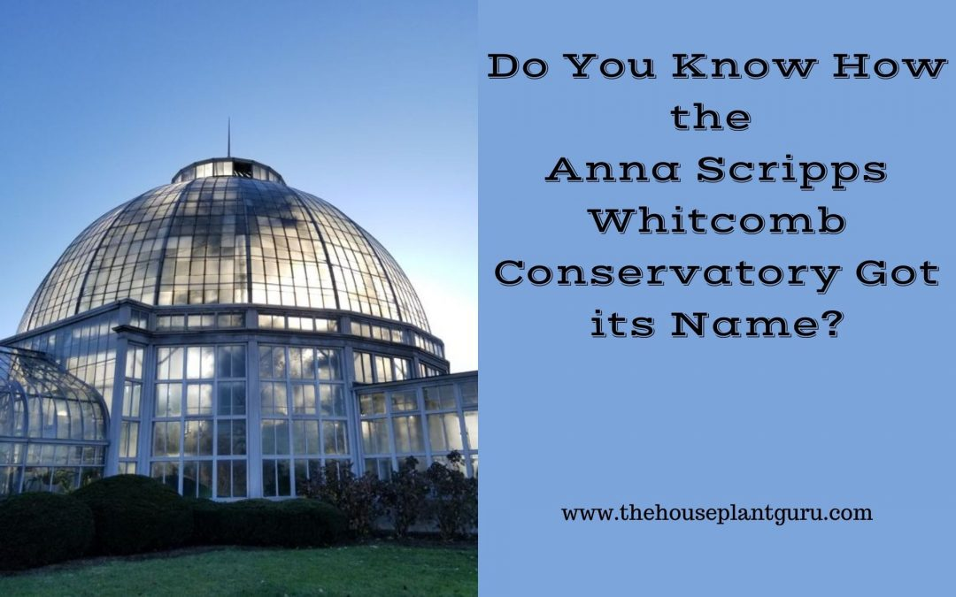 Do You Know How the  Anna Scripps Whitcomb Conservatory Got its Name?