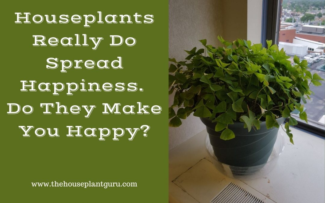 Houseplants Really Do Spread Happiness. Do They Make You Happy?