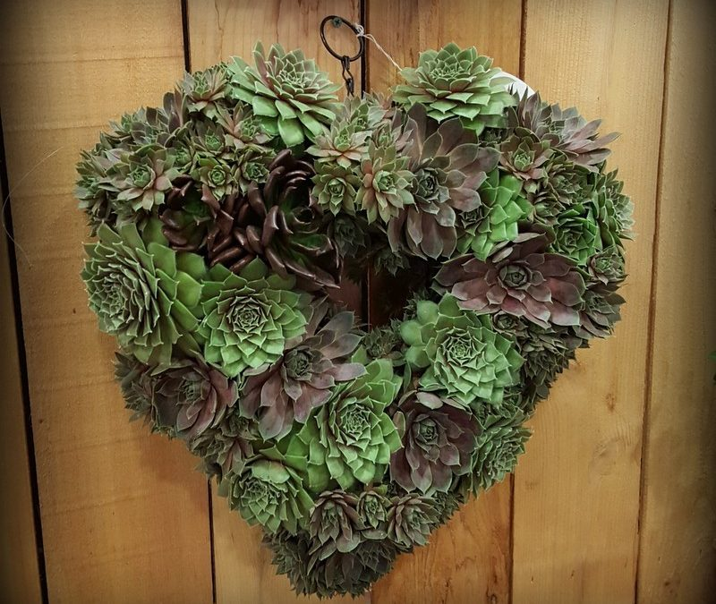 Succulent Walls and Whimsy at Cultivate 15′