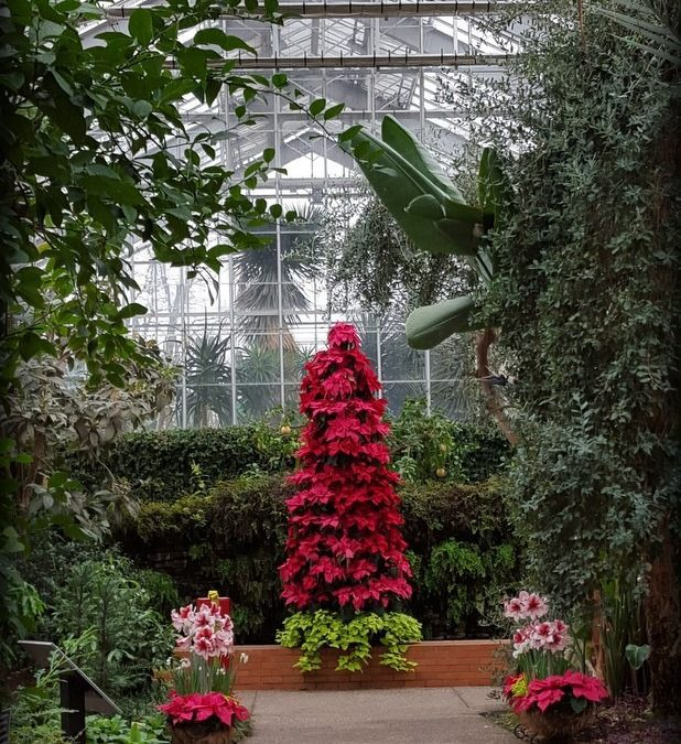 Conservatory Christmas