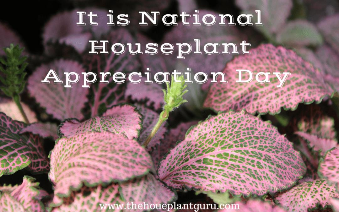Houseplant Appreciation Day