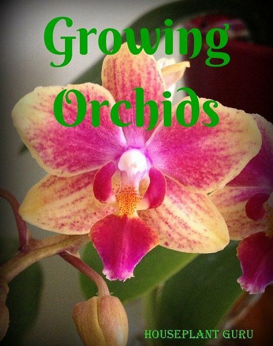 Growing Moth Orchids-Phalaenopsis