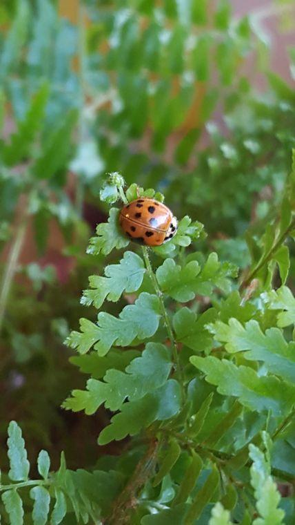 ladybug on fern