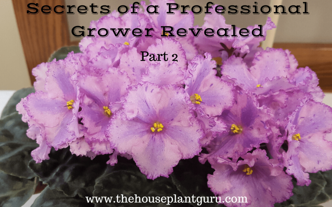 Secrets of a Professional Grower Revealed Part 2