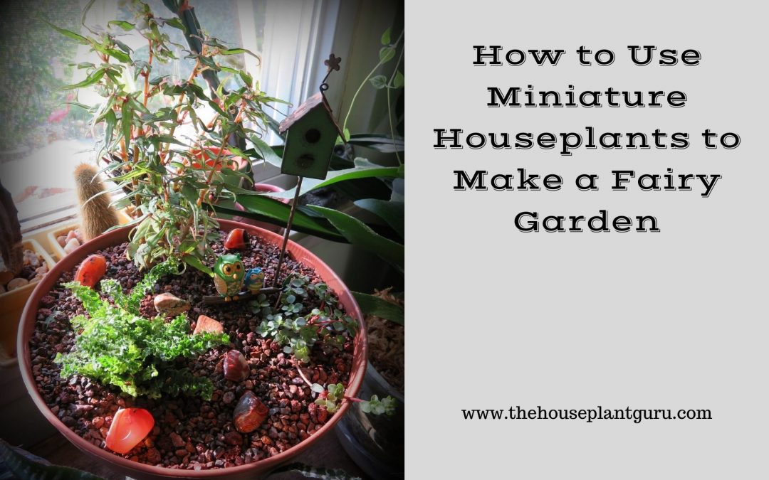 How to Use Miniature Houseplants to Make a Fairy Garden