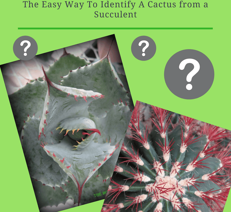 Here is an Easy Way to Tell the Difference Between a Cactus and a Succulent
