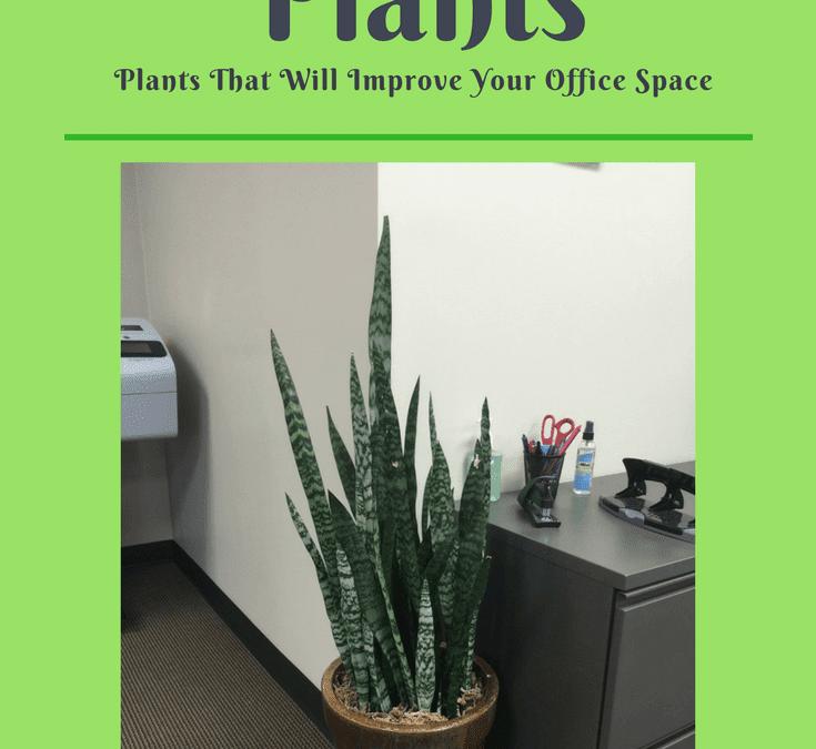 Choosing an Office Plant