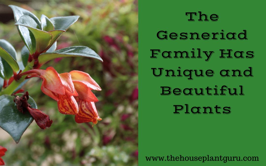 The Gesneriad Family