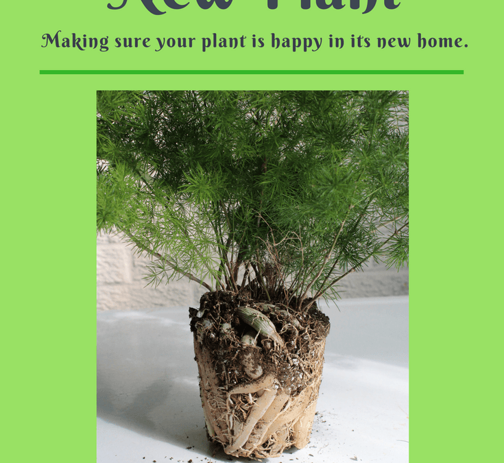 Re-Potting A New Plant