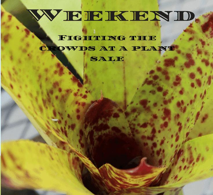 Plant CRAZY Weekend!