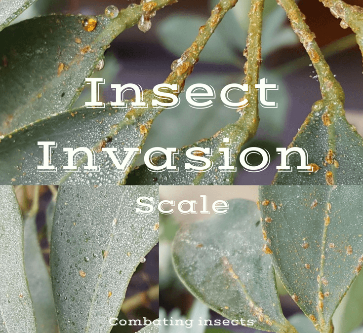 Scale Insects and How to Control Them on Your Houseplants