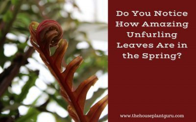 Do You Notice How Amazing Unfurling Leaves Are In The Spring?