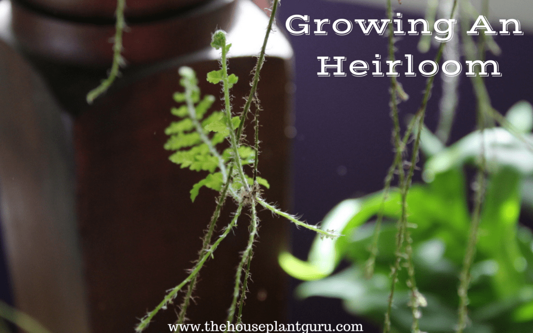 Growing An Heirloom