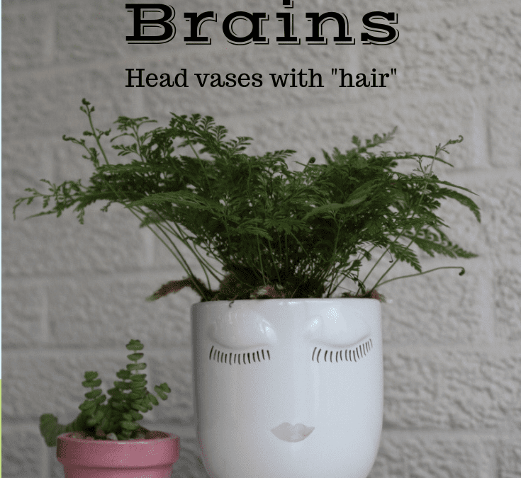 Roots for Brains