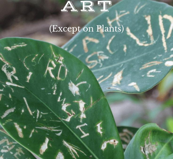 Graffiti Is Art (Except on Plants)