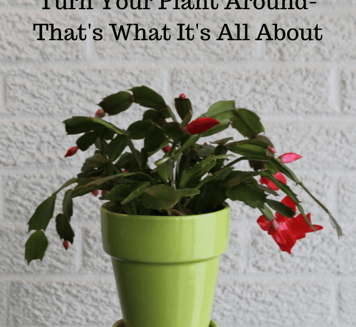 #TuesdayTidbits Turn Your Plant Around-That's What it's All About