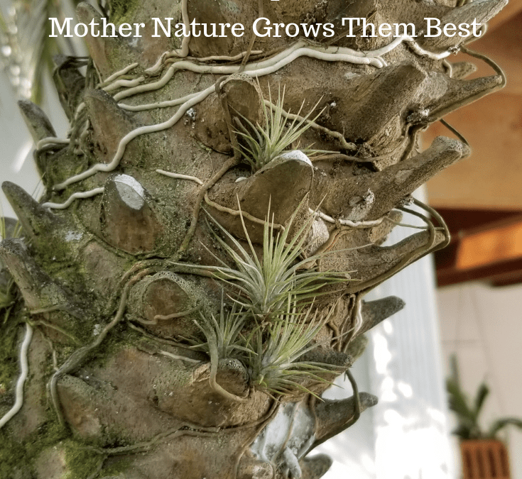 #TuesdayTidbits Mother Nature Grows Them Best
