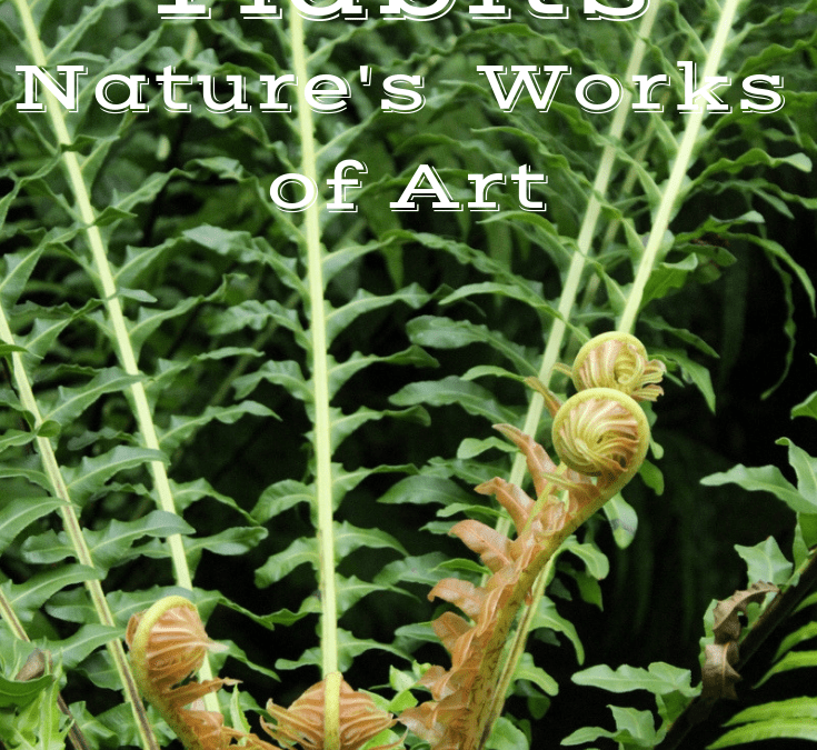 Rabbit's foot fern Archives - The Houseplant Guru on rabbit foot fern, goose foot house plant, elephant foot house plant, rabbit foot green,
