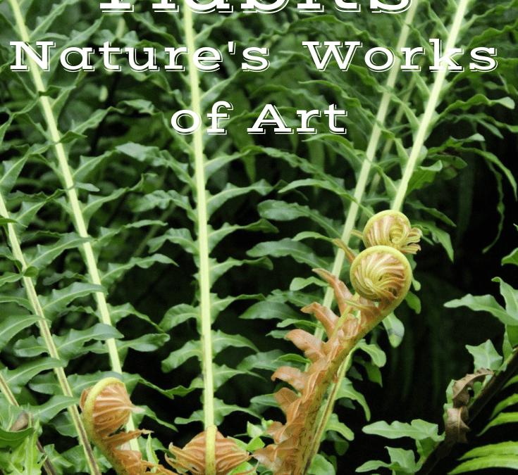 #TuesdayTidbits Nature's Works of Art