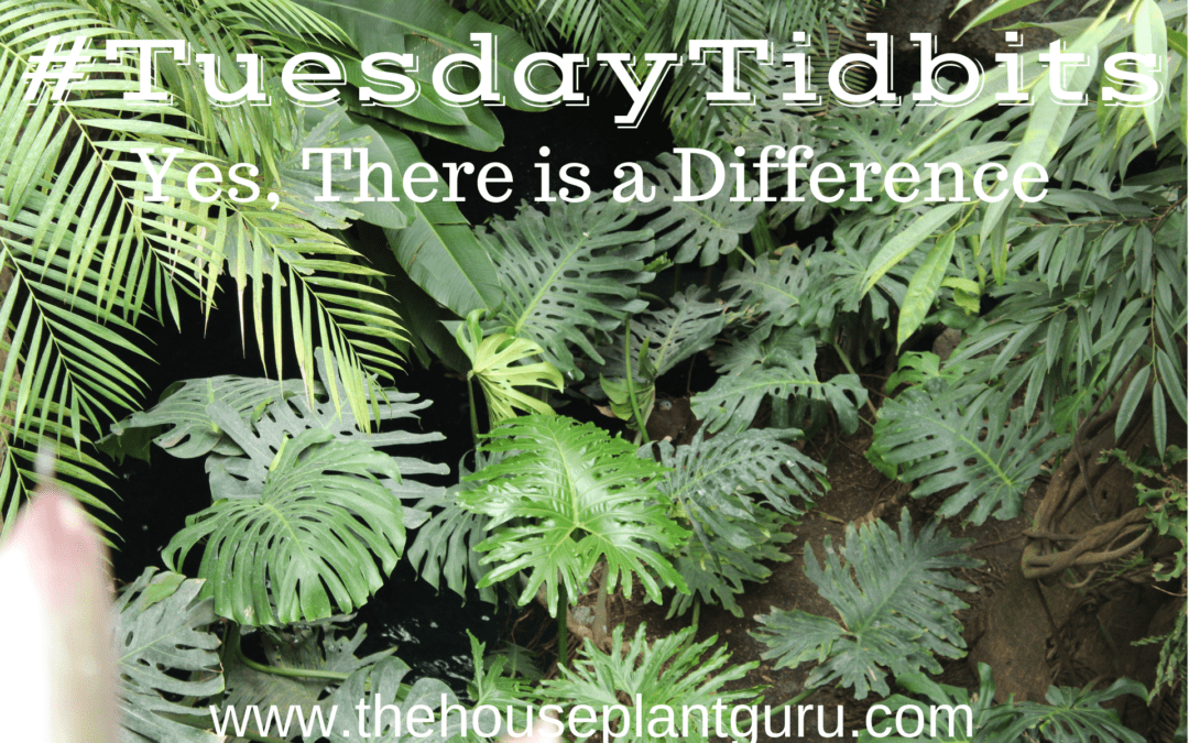 #TuesdayTidbits Yes, There is a Difference