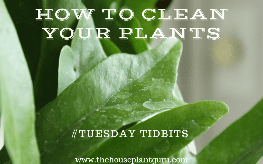 How to Clean Your Plants #Tuesday Tidbits