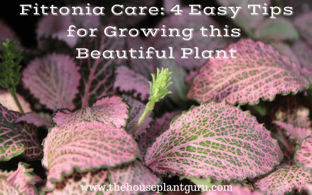 Fittonia Care: 4 Easy Tips for Growing this Beautiful Plant