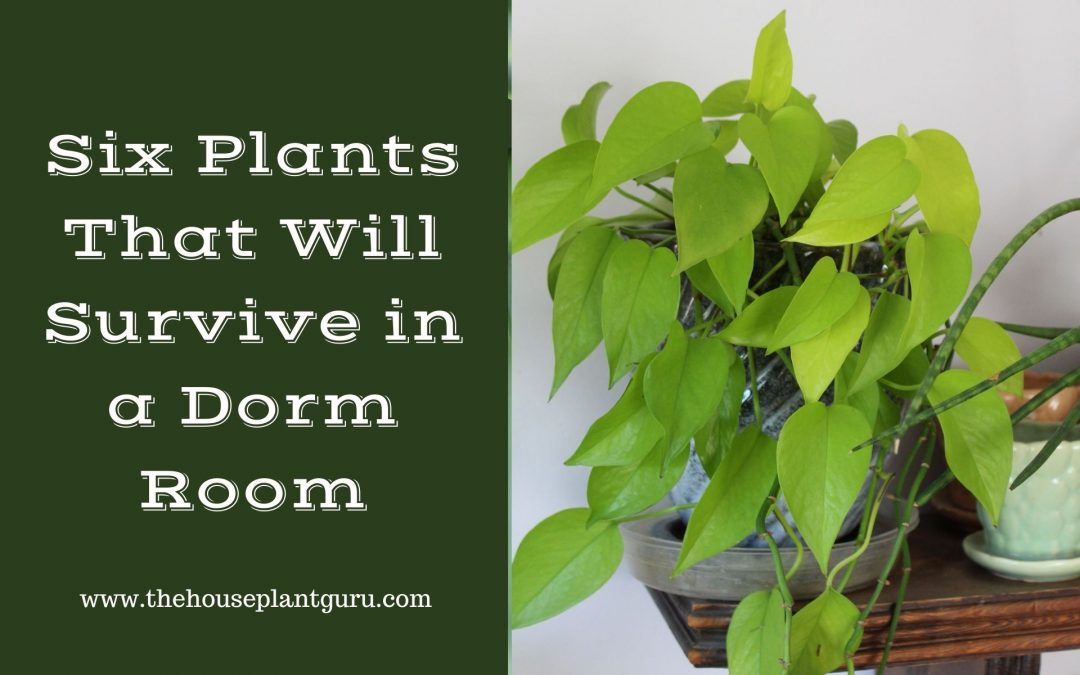 Six Plants That Will Survive in a Dorm Room