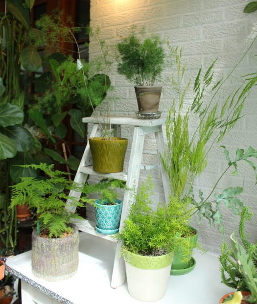 How To Care For Your Asparagus Fern The Houseplant Guru