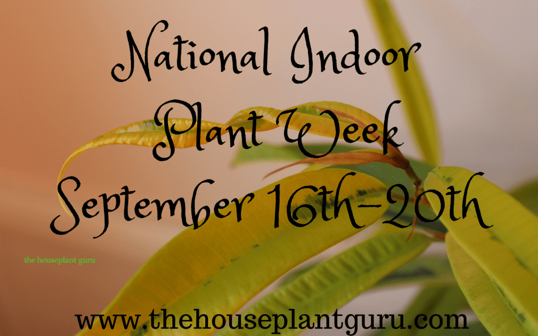 Did You Know There is a Week Dedicated to Indoor Plants?