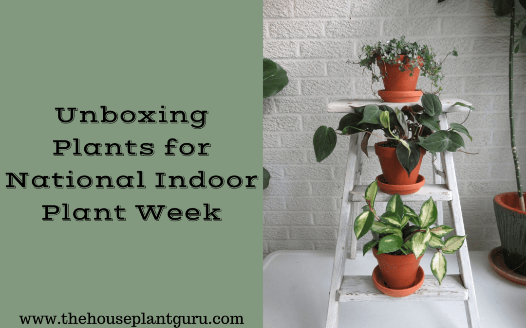 Unboxing Plants for National Indoor Plant Week
