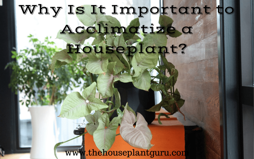 Why Is It Important to Acclimatize a Houseplant?
