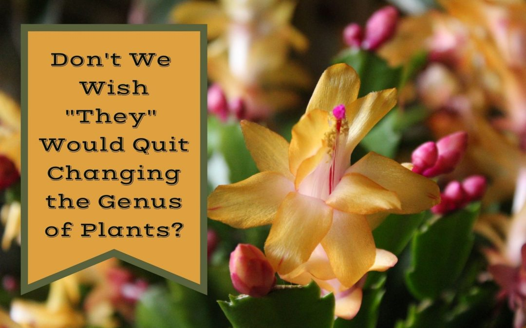 """Don't We Wish """"They"""" Would Quit Changing the Genus of Plants?"""