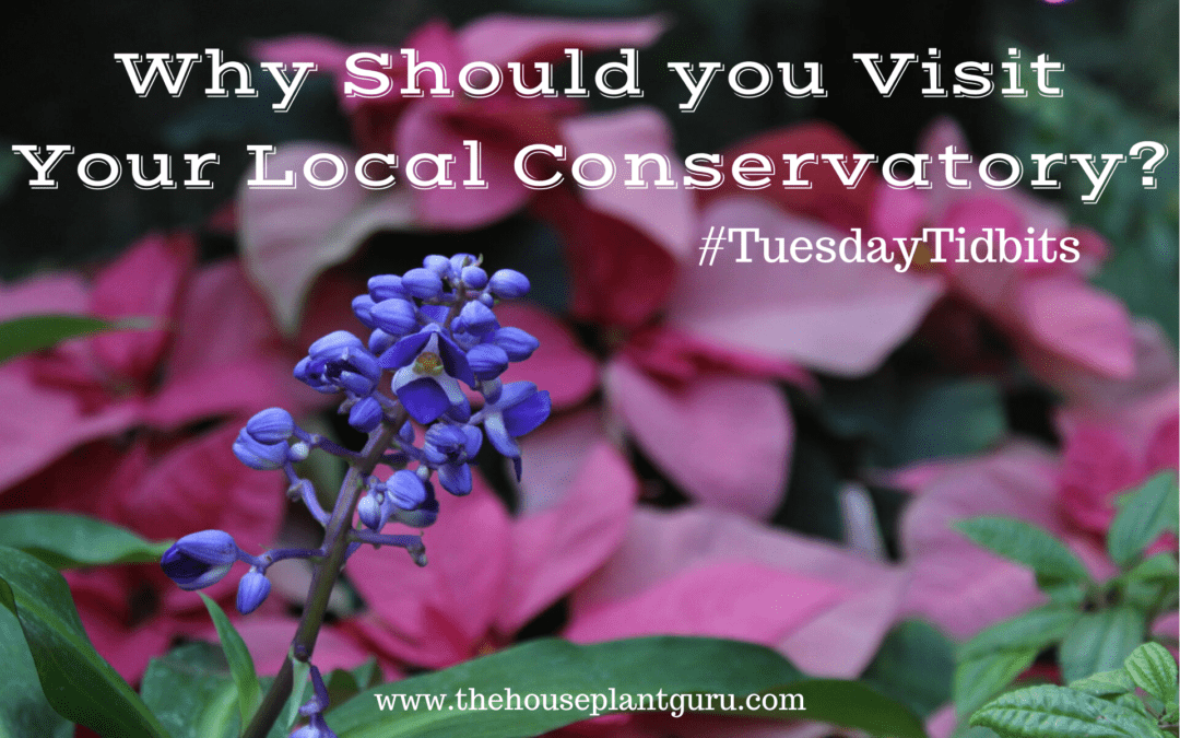 Why Should you Visit Your Local Conservatory?